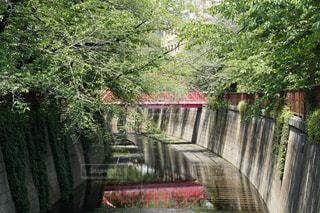 #自然,#橋,#目黒川,#水面に写る世界,#中目黒,#ファインダー越しの世界,#photography