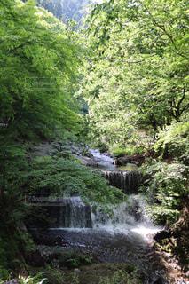 自然,森林,屋外,川,滝