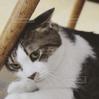 猫,動物,屋内,ネコ科の動物
