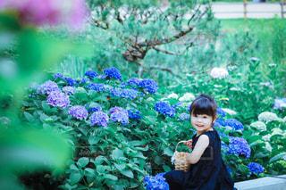 紫陽花と女の子の写真・画像素材[3378027]
