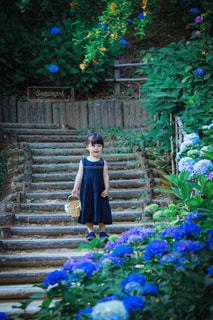 紫陽花の写真・画像素材[3378032]