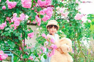 薔薇とくまさんの写真・画像素材[3582833]