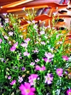 花とピアノの演奏会の写真・画像素材[3201198]