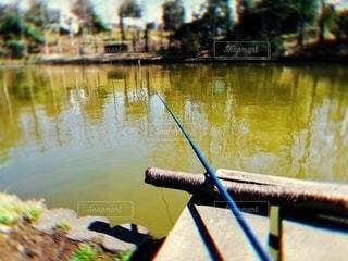 春のヘラブナ釣りの写真・画像素材[3202090]