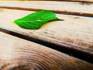ベンチの上の葉っぱの写真・画像素材[3202197]