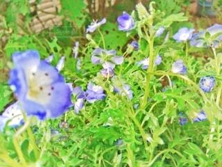 花のクローズアップの写真・画像素材[3202225]
