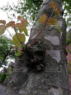 朝のハナミズキの写真・画像素材[3204056]