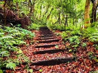 緑豊かな森の写真・画像素材[3204091]