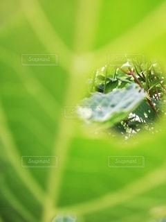虫食い穴からの景色の写真・画像素材[3204770]