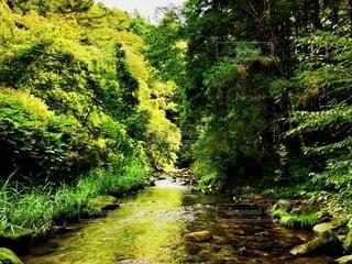 緑豊かな森に流れる小川の写真・画像素材[3205041]