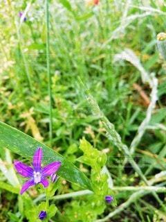 野原の紫色の花の写真・画像素材[3208191]