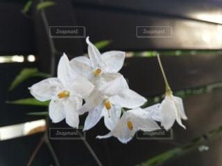 朝の白い小花の写真・画像素材[3209603]