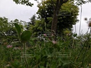 自然,空,花,森林,屋外,緑,葉,草,爽やか,樹木,新緑,たくさん,グリーン,草木,ガーデン,フローラ