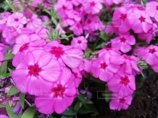 花のクローズアップの写真・画像素材[3209666]