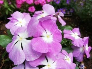 花のクローズアップの写真・画像素材[3209665]