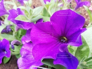 自然,花,緑,紫,葉,鮮やか,爽やか,新緑,草木,むらさき,フローラ