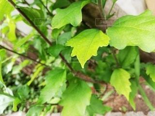 自然,屋外,緑,葉,爽やか,グリーン,草木