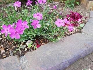 自然,花,庭,屋外,かわいい,葉,景色,鮮やか,草,地面,草木,小花,ガーデン,塗装,むらさき,縁石,フローラ