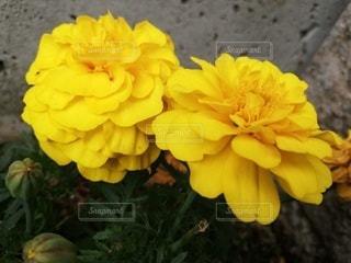 自然,花,庭,かわいい,黄色,葉,たくさん,草木,小花,フローラ,黄色い小花