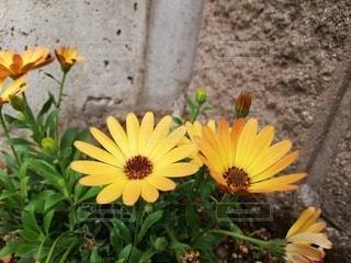 咲き誇るの写真・画像素材[3209672]