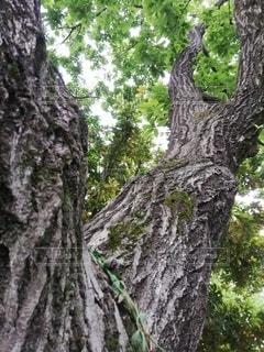森の中の木の写真・画像素材[3239602]