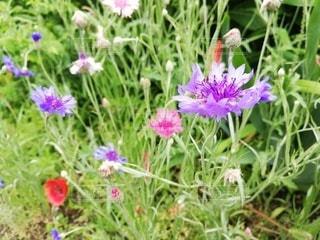 可憐な草花の写真・画像素材[3239605]