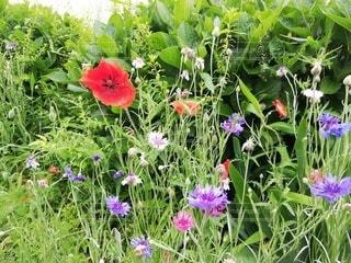 花園のクローズアップの写真・画像素材[3239607]