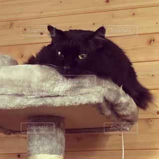 猫,動物,屋内,黒,木目,見つめる,だらける