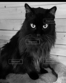 猫,動物,屋内,黒,モノクロ,座る,見つめる