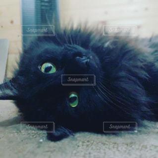 猫,動物,屋内,黒,目,見つめる