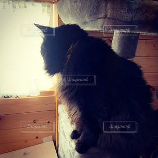 窓の前に座っている黒猫の写真・画像素材[3216857]