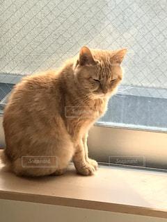 猫,動物,座る,日向ぼっこ,窓ぎわ