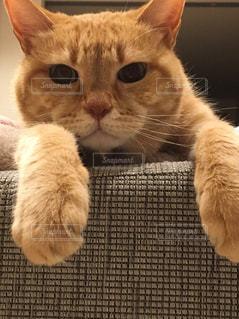 猫,動物,かわいい,顔のアップ