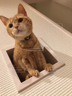 猫,動物,屋内,かわいい,ネコ穴