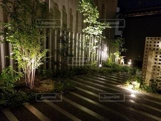 観葉植物,草木,ガーデン