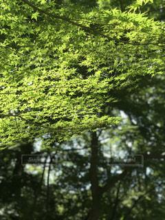森の中の木の写真・画像素材[3214618]