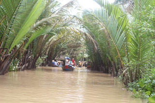 屋外,ボート,川,水面,旅行,ヤシの木,ベトナム,クルーズ,メコン川,草木,熱帯