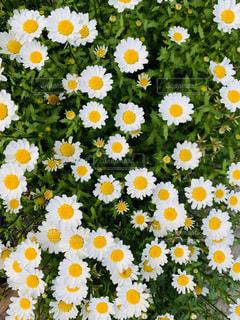 自然,花,白