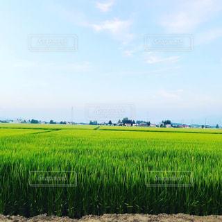 自然,空,屋外,緑,田園,農業,作物,ファーム,米どころ