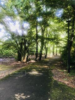 森の中の木の写真・画像素材[3202594]