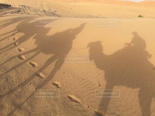 自然,動物,旅行,砂漠,ラクダ,モロッコ,サハラ砂漠