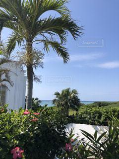 風景,海,空,花,緑,ヤシの木,リゾート