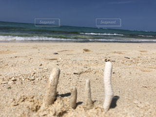 家族,自然,海,ビーチ,サンゴ,砂浜,愛,地面