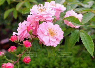 花のクローズアップの写真・画像素材[3205016]