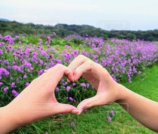 風景,空,花,夏,カップル,屋外,ピンク,紫,ラベンダー,ハート,夏休み,淡路島,彼氏,嫁,草木,彼女,ガーデン,旦那,かなり