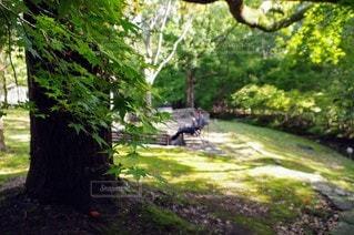 自然,公園,森林,屋外,樹木,人