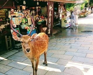 空,屋外,景色,鹿,奈良