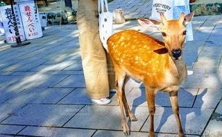 動物,屋外,景色,鹿