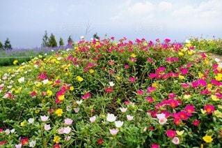 風景,空,花,屋外,草木,ガーデン