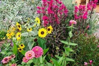 花,屋外,ひまわり,景色,鮮やか,草木,ガーデン